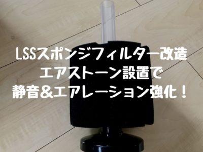 LSSスポンジフィルター改造|エアストーン設置で静音&エアレーション強化!