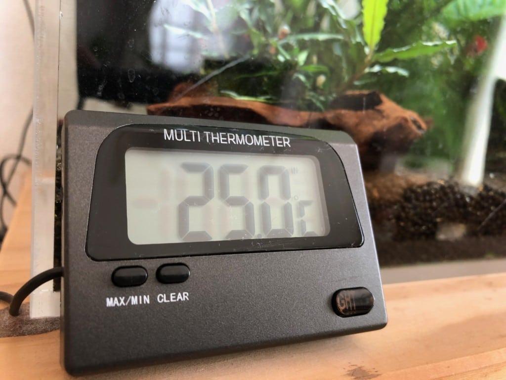 レッドビーシュリンプ水槽の水温計