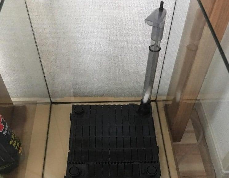 レッドビーシュリンプの45㎝水槽
