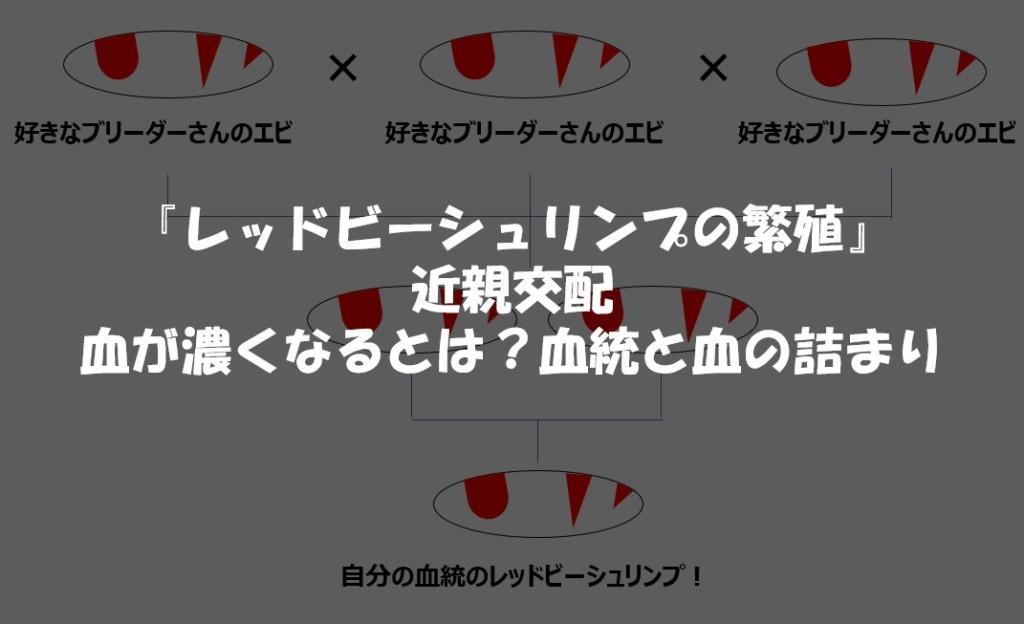 『レッドビーシュリンプの繁殖』 近親交配 血が濃くなるとは?血統と血の詰まり