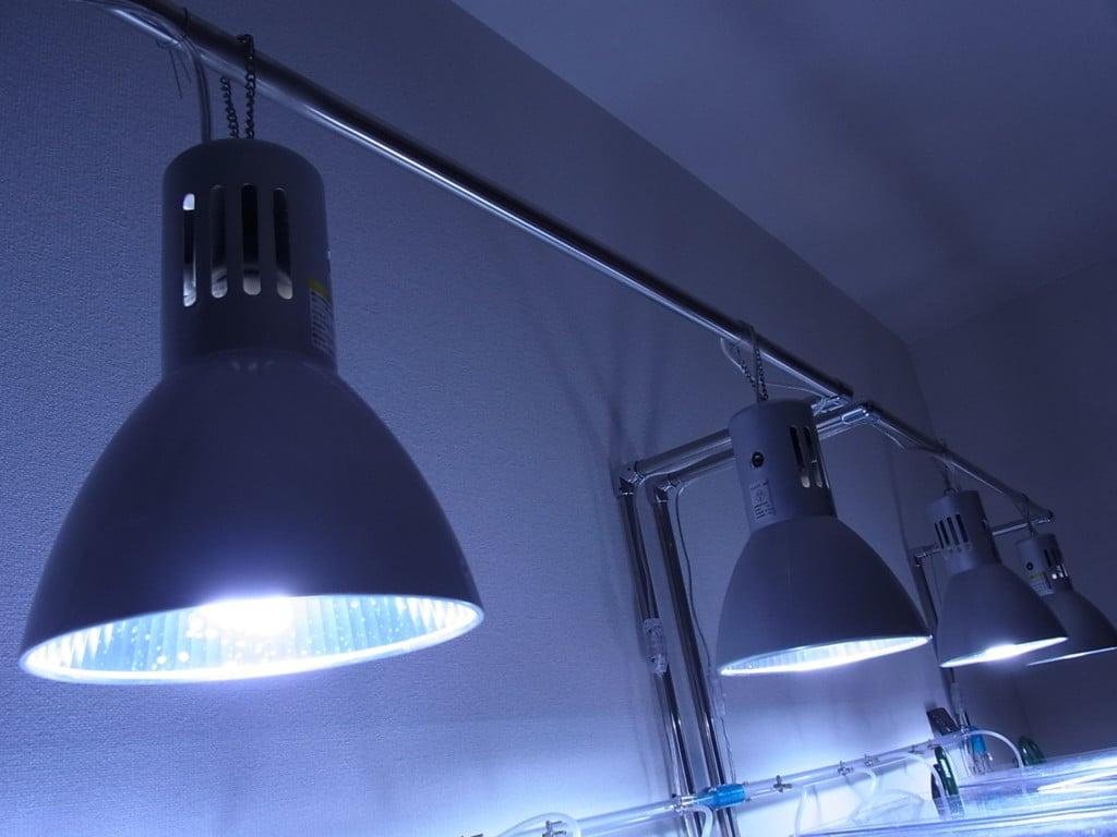 ビーシュリンプのおすすめ蛍光灯