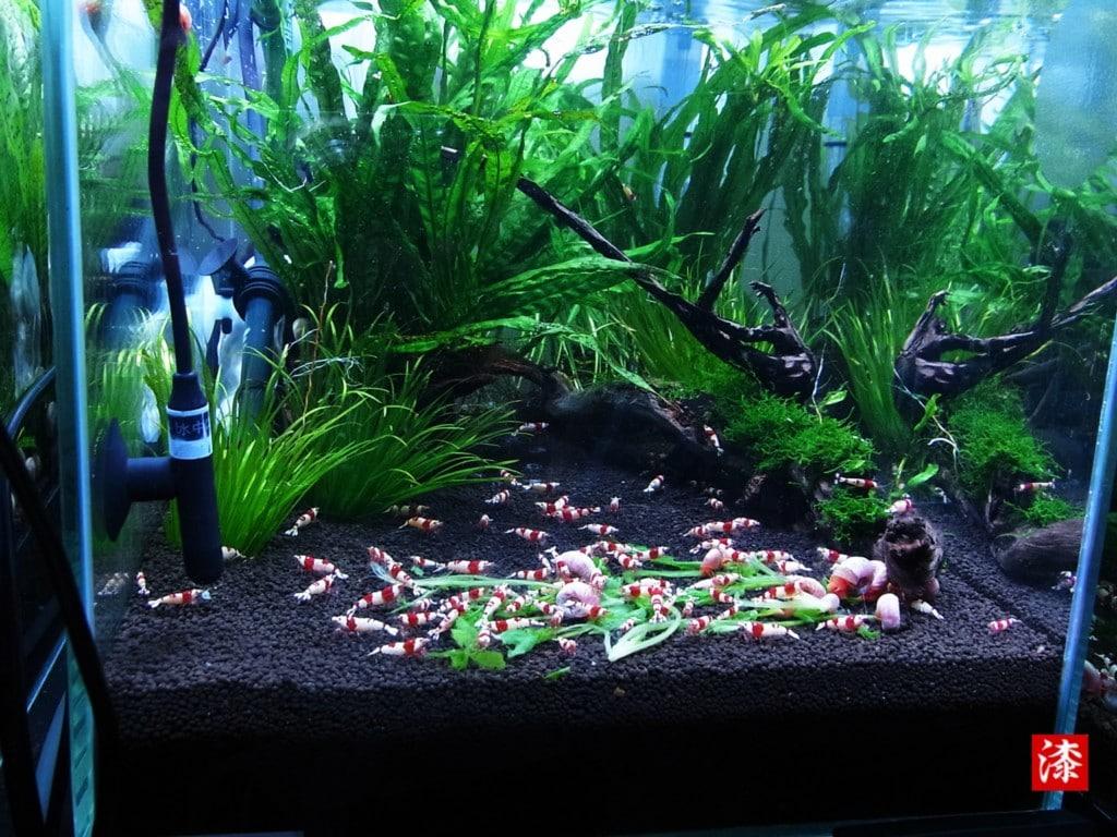 水草が育つLEDライト